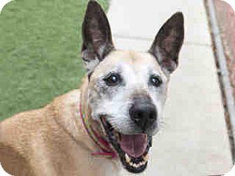 Shepherd (Unknown Type) Mix Dog for adoption in Agoura, California - Mia