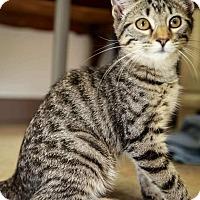 Adopt A Pet :: Prue - Trevose, PA