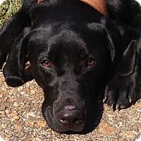 Adopt A Pet :: Lexy - Washington, DC