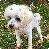 Adopt A Pet :: Sarah - Tonawanda, NY