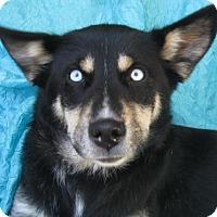Adopt A Pet :: Eliza Jacobs - Cuba, NY