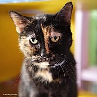 Adopt A Pet :: Nutmeg - Tucson, AZ