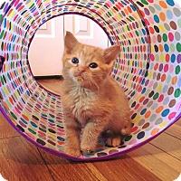 Adopt A Pet :: CYPRESS - Burlington, NC