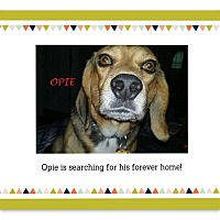 Adopt A Pet :: OPIE - Ventnor City, NJ