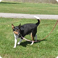 Adopt A Pet :: Rosco - Crystal Lake, IL