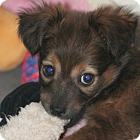 Adopt A Pet :: Adeline - Lodi, CA