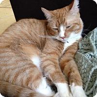 Adopt A Pet :: Arthur - Sherman Oaks, CA