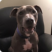 Adopt A Pet :: Brady - Harrisville, RI