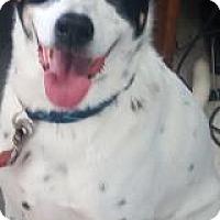 Adopt A Pet :: Charlie - Visalia, CA