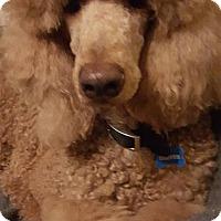 Adopt A Pet :: Grover - Alpharetta, GA