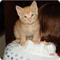 Adopt A Pet :: Pumpkin - Proctor, MN
