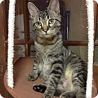Adopt A Pet :: Cedar - Byron Center, MI