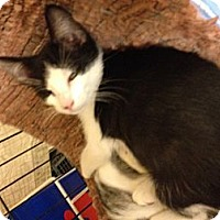 Adopt A Pet :: Josh - Fort Lauderdale, FL