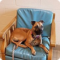 Adopt A Pet :: Daisy - Jackson, MI