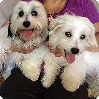 Adopt A Pet :: Ruby & Ringo - Van Nuys, CA