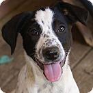 Adopt A Pet :: Heart