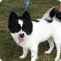 Adopt A Pet :: Patches - Fennville, MI