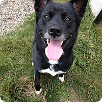 Adopt A Pet :: Jack - Foster Home Needed - Rochester/Buffalo, NY