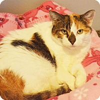 Adopt A Pet :: Dolly - Lincoln, NE
