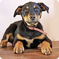 Adopt A Pet :: Wesson - Waldorf, MD