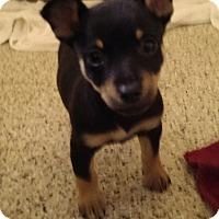 Adopt A Pet :: Munch - Thousand Oaks, CA