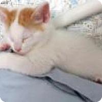 Adopt A Pet :: Ariel and Sebastian - Mission Viejo, CA