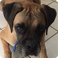 Adopt A Pet :: Remington - Central & West Florida, FL