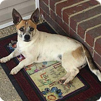 Adopt A Pet :: Fritzy in CT - Manchester, CT