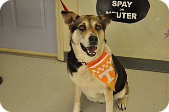 Shepherd (Unknown Type)/Hound (Unknown Type) Mix Dog for adoption in Providence, Rhode Island - Sable-URGENT