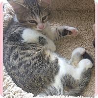 Adopt A Pet :: Hester - Mt. Prospect, IL