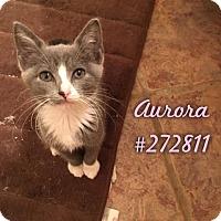Adopt A Pet :: AURORA - Conroe, TX