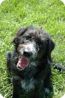 Border Collie/Terrier (Unknown Type, Medium) Mix Dog for adoption in Logan, Utah - Piper *PENDING*