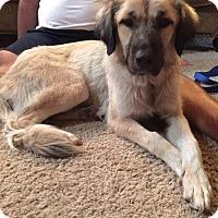 Adopt A Pet :: Mischka - Adoption Pending! - Ascutney, VT