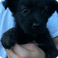 Adopt A Pet :: Heidi - Kittery, ME