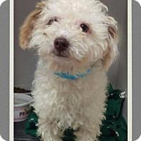 Adopt A Pet :: Nero - Mesa, AZ