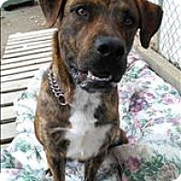 Adopt A Pet :: Boost - Vernon, BC
