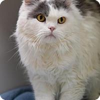 Adopt A Pet :: Smokie - DFW Metroplex, TX