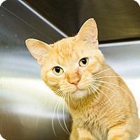 Adopt A Pet :: Phillip - Seville, OH