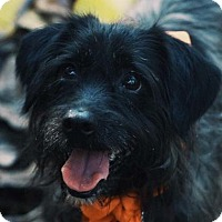 Adopt A Pet :: Lily - Fort Lauderdale, FL