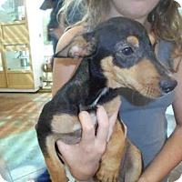 Adopt A Pet :: JONATHAN - Lacombe, LA