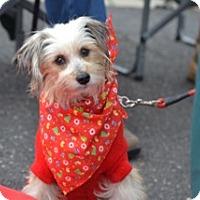Adopt A Pet :: Eileen - Matthews, NC