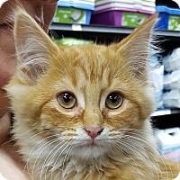 Adopt A Pet :: Zoey - Toronto, ON