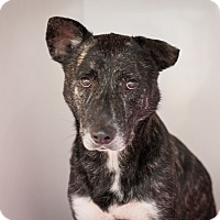 Adopt A Pet :: Wade - Dallas, TX