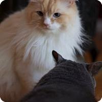 Adopt A Pet :: Boo - SC - Liberty, NC