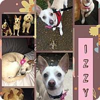 Adopt A Pet :: Izzy - Fenton, MO