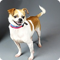 Adopt A Pet :: Theo - Columbia, IL