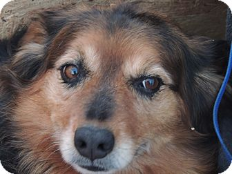 Suzie | Adopted Dog | ...