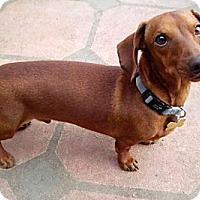 Adopt A Pet :: Mac - San Jose, CA