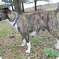 Adopt A Pet :: Winnie - Southampton, PA