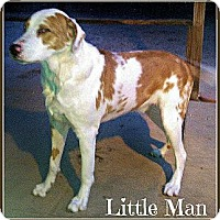Adopt A Pet :: Little Man - Silsbee, TX